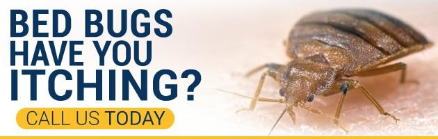 Call Phoenix Bed Bug Expert   480 351 6377