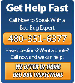 Call Phoenix Bed Bug Expert - 480-351-6377