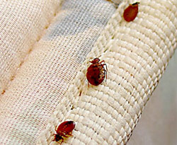 Litchfield Park Bed Bug Removal